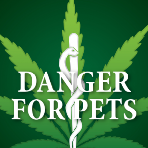 marijuana-is-dangerous-for-pets-300x300