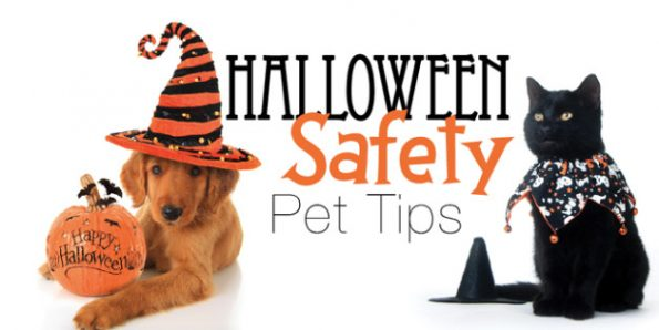 a dog and a cat in Halloween costumes with message Halloween Safety Pet tips